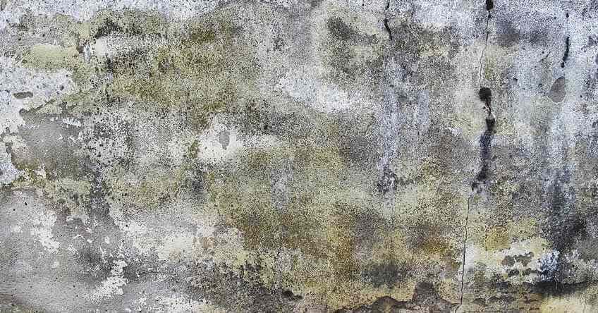 Zid buđ boje