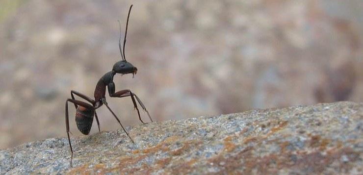 Kako se rešiti mrava u stanu