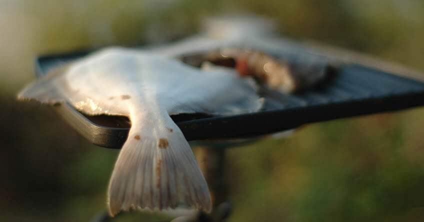 sveza riba
